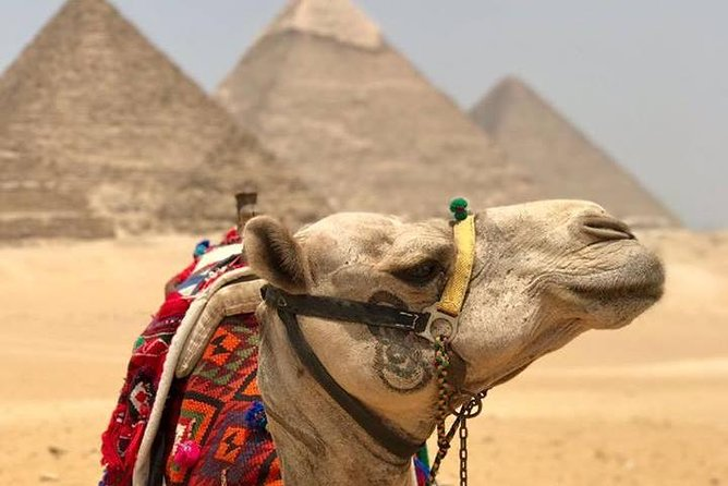 Giza pyramids sphinx day tour include lunch koshry