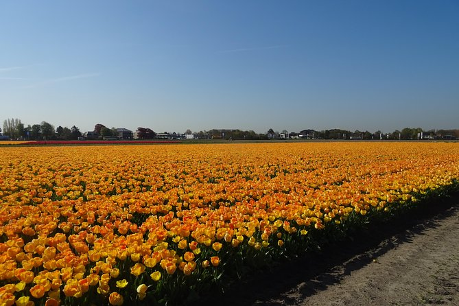 4 hours private tour to the famous colourfull flower fields from Amsterdam photo 6