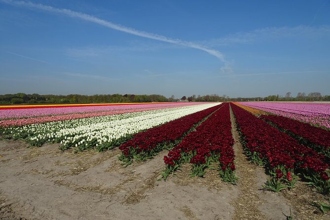 4 hours private tour to the famous colourfull flower fields from Amsterdam photo 1
