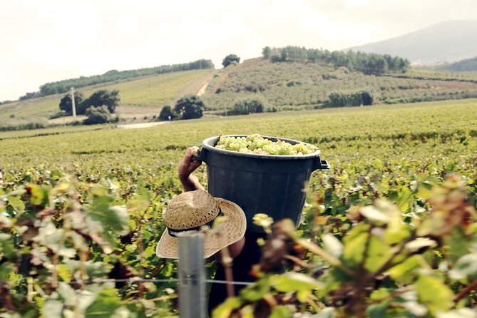 Óbidos & the Wines of the West
