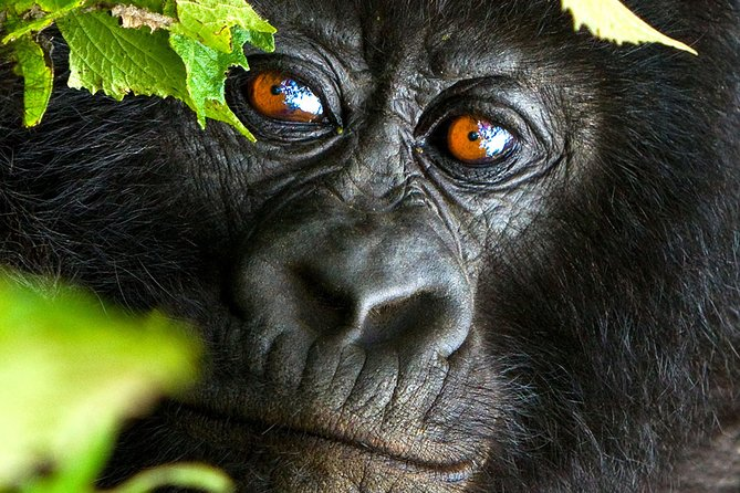 3days Mountain Gorilla Trekking In The Highlands