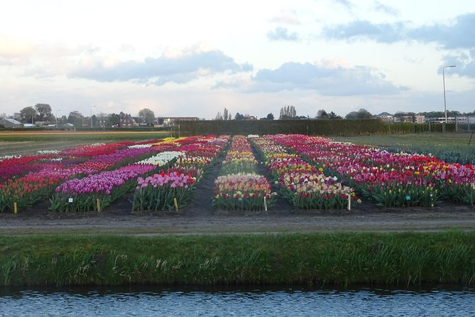 4 hours private tour to the famous colourfull flower fields from Amsterdam photo 2
