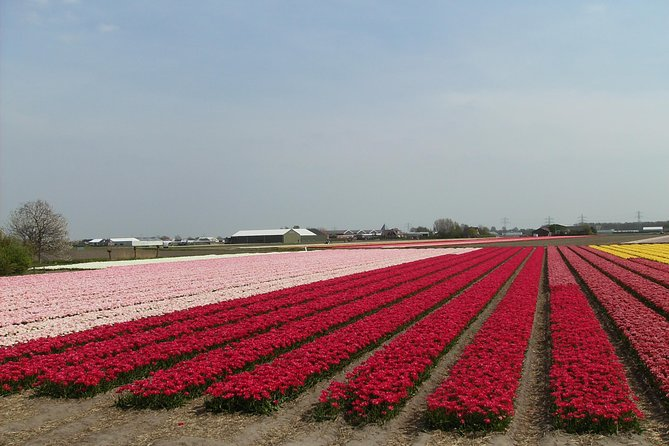 4 hours private tour to the famous colourfull flower fields from Amsterdam photo 7