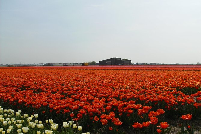 4 hours private tour to the famous colourfull flower fields from Amsterdam photo 3