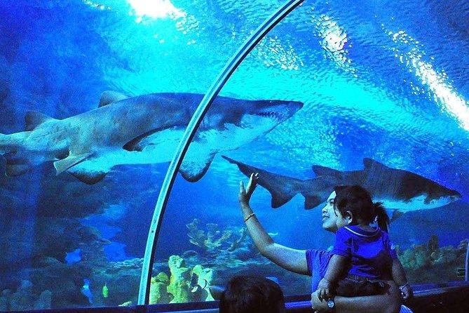 Aquaria KLCC Admission Ticket with Free Kuala Lumpur City Tour