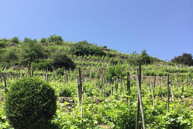 Northern Rhône Valley half day private tour