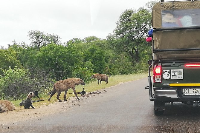 Kruger National Park 3 Days 2 Nights Classic Safari from Johannesburg Private