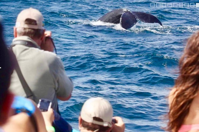 From Punta Cana: Famous Whale Samana and Cayo Levantado Beach with Whale Biologist photo 2