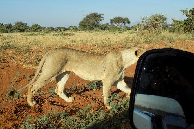 4 Days Masai Mara and Lake Nakuru Safari