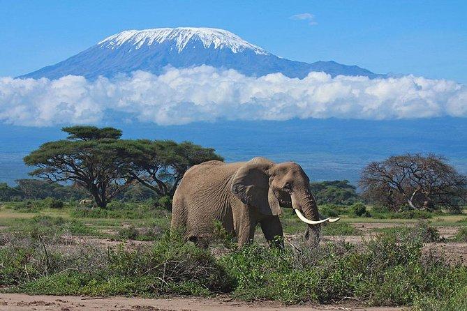 4 Days Amboseli & Tsavo - Mombasa