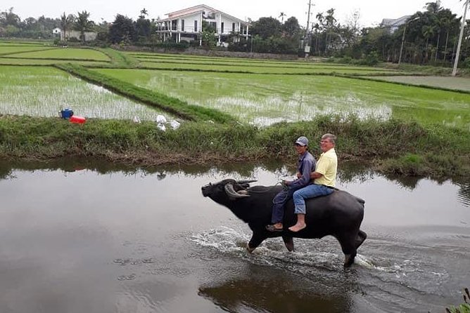 Experience Local Daily Life of Hoi An countryside from Hotels in Hoi An,Da Nang photo 7