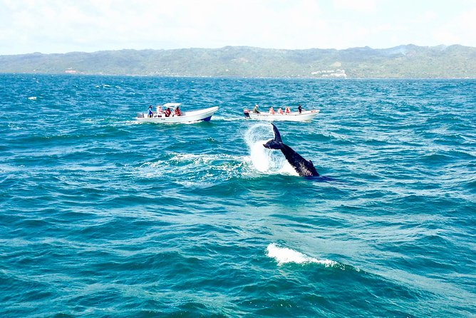 From Puerto Plata-Sousua Famous Whale Samana Cayo Levantado with Whale Biologist photo 7
