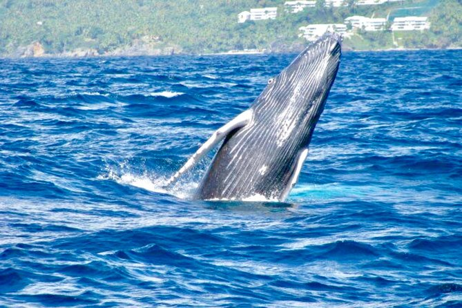 From Puerto Plata-Sousua Famous Whale Samana Cayo Levantado with Whale Biologist photo 1