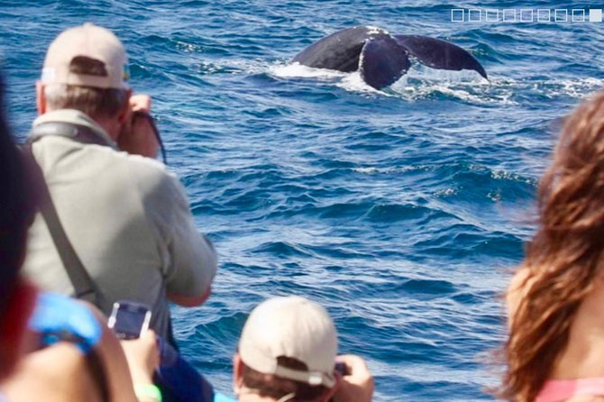 From Puerto Plata-Sousua Famous Whale Samana Cayo Levantado with Whale Biologist photo 3