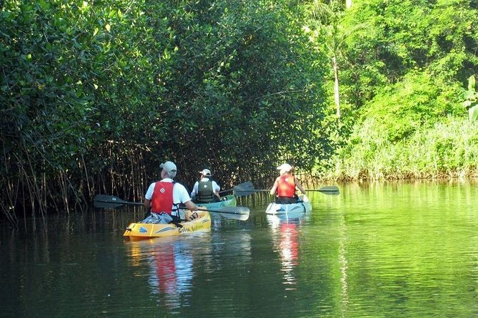 Tamarindo river guided kayak mangrove & environment watching tour in Guanacaste