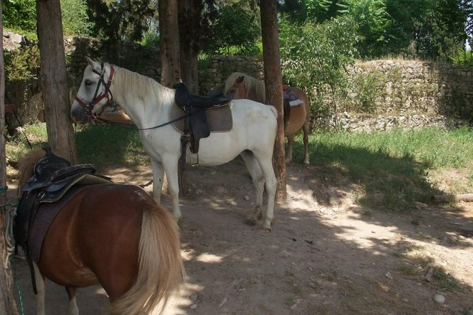 Ancient Roman Horseback Riding Experience