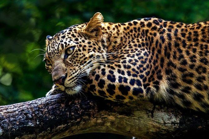 Mudumalai wildlife heaven from Bangalore