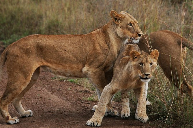 2 Days 1 Night Masai Mara National PARK JOINING TOUR.Departure from Nairobi