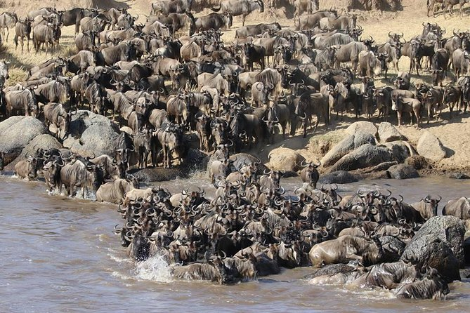 4 Days Masai Mara -Lake Nakuru National Park From Nairobi