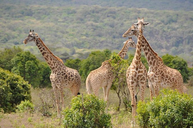 1 Day tour Arusha National Park