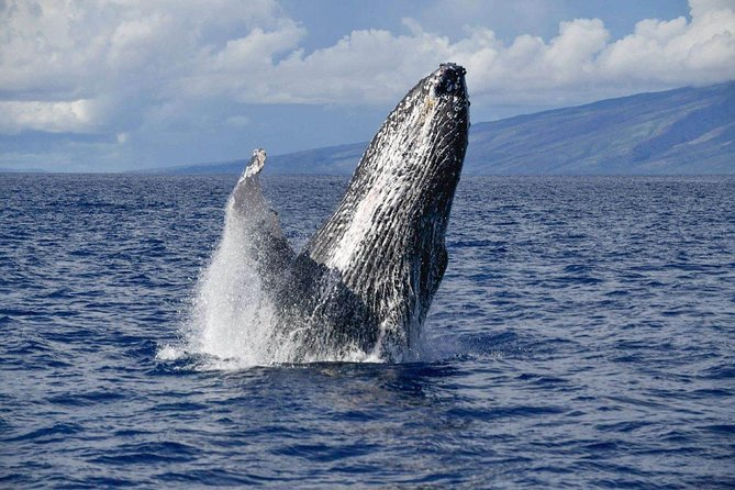 Whale Watch Adventure from Lahaina photo 6