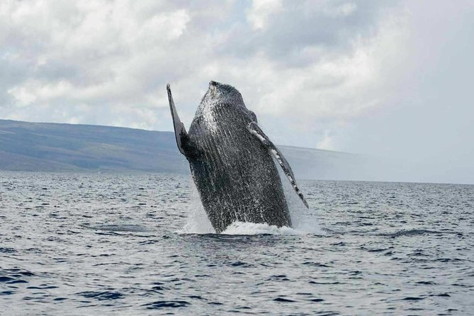 Whale Watch Adventure from Lahaina photo 2