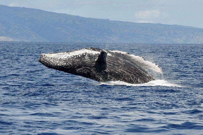 Whale Watch Adventure from Lahaina photo 3