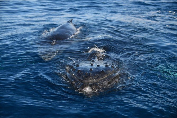 Whale Watch Adventure from Lahaina photo 11