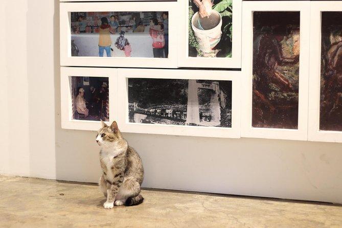 cats at cat village