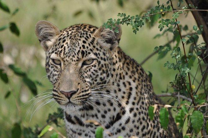 6 Days Kenya Allround Safari - Mombasa