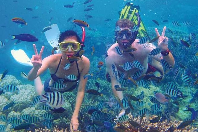 Oplev Snorkeling & Skin Dive Course i Taurito