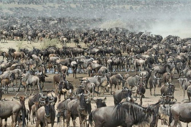 6 Day Mid-range Safari Serengeti,Ngorongoro,lake Manyara,Tarangire,and Arusha