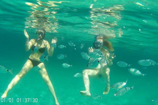 many fishes around us