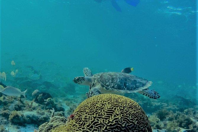 Catamaran Group Sightseeing, Snorkeling Tour Isla Mujeres