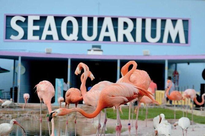 Miami Seaquarium Full-Day General Admission Ticket