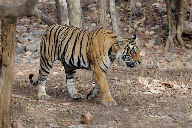 Explore Panna National Park From Khajuraho
