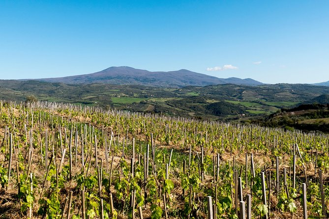 Luxury Brunello wine tour