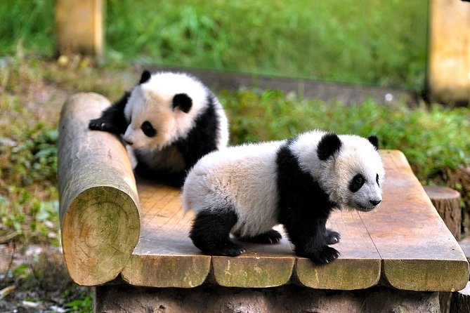 Half-day Private tour of Chongqing Zoo with Transfer to Chongqing Airport