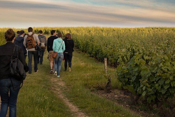 Tour of a Vineyard, Winery & Cellar with Wine Tasting in Vouvray, Loire Valley