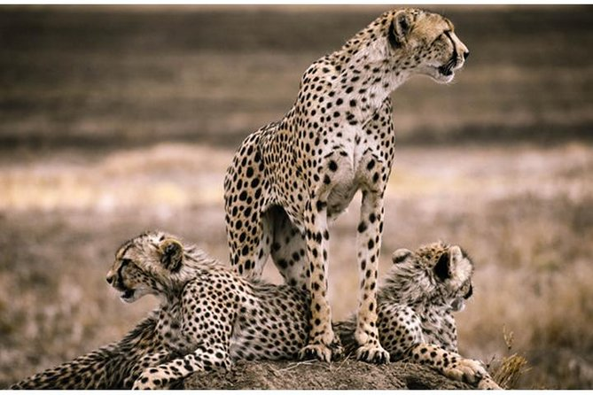 8 Days: Serengeti Big Cats And Bushmen S Of Eyasi.