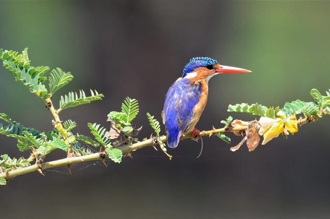 Ethiopia Birds and Wild Life ( 12 Days North and South )