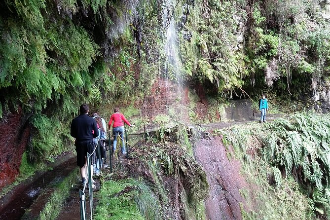 Levada do Rei - Madre of Life small Group Guided Walk photo 7