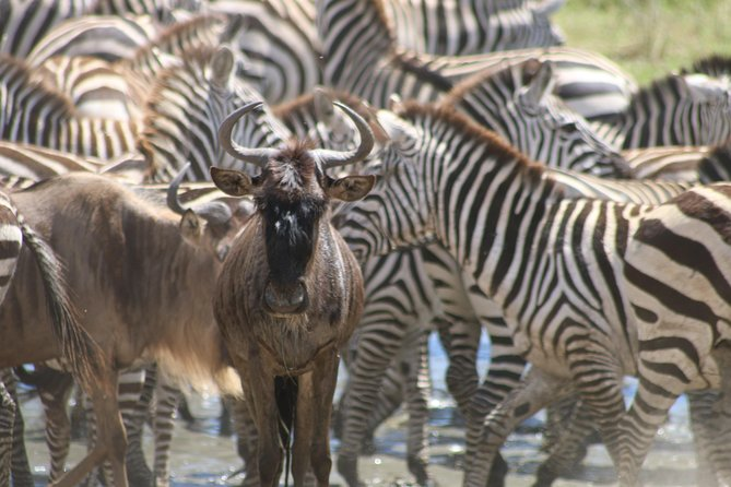 Great Migration Safari 2019