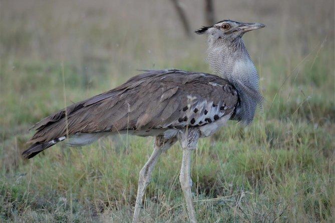2 Days Safari, Nature, Wildlife & Bird, tour to Awash National Park
