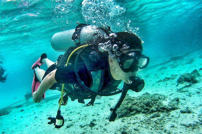 Koh Tao Diving Tour , 2 Dives