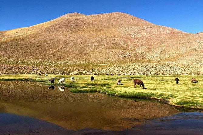 Small-Group Tour to Tatio Geysers Machuca Village & Rio Putana wetlands photo 4