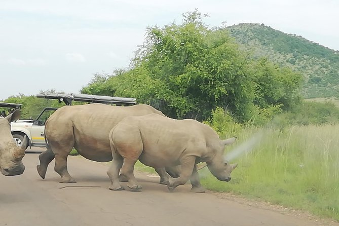 Kruger National Park 2 Days 1 Night Magical Safari from Johannesburg Private