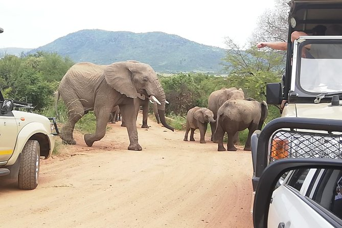 Pilanesberg Safari 3 Days 4 Star Private