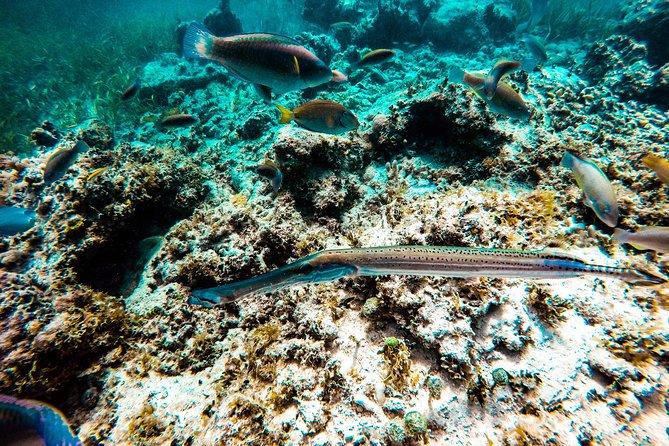 Snorkel Area