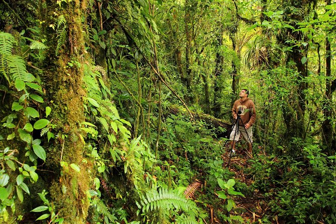 Cloud Forest Hike at Juan Castro Blanco National Park